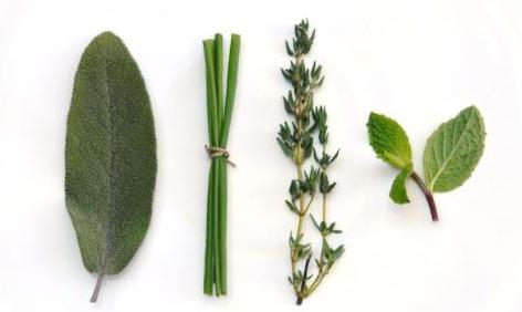 Efectos emocionales de las distintas plantas según su fragancia